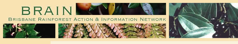 Brisbane Rainforest Action & Information Network